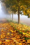 Frosty autumn leaves Royalty Free Stock Photography