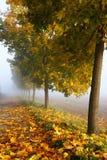 Frosty autumn leaves Stock Photos