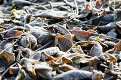 Frosty autumn leaves blur background Stock Photos
