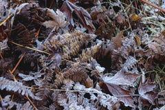Frosty Autumn Leaves op Grond Royalty-vrije Stock Foto