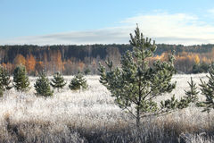 Frosty autumn morning Royalty Free Stock Images