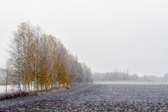 Frosty Autumn Morning. The mornings are beginning to be cold. Soon it will be winter royalty free stock image