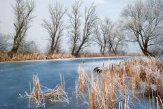Frosty backwater with trees Royalty Free Stock Images