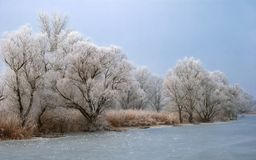 Frosty backwater with trees Stock Photography