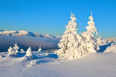 On a frosty beautiful day among high mountains and peaks are magical trees covered with white fluffy snow. On a frosty beautiful day among high mountains and Stock Photography