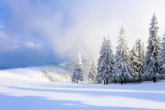 On a frosty beautiful day among high mountains and peaks are magical trees covered with white fluffy snow. On a frosty beautiful day among high mountains and stock image