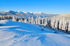 On a frosty beautiful day among high mountains and peaks are magical trees covered with white fluffy snow. On a frosty beautiful day among high mountains and Royalty Free Stock Image