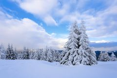 On a frosty beautiful day among high mountains and peaks are magical trees covered with white fluffy snow. On a frosty beautiful day among high mountains and royalty free stock photography