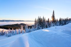 On a frosty beautiful day among high mountains and peaks are magical trees covered with white fluffy snow. stock photos