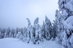 On a frosty beautiful day among mountains are magical trees covered with white fluffy snow against the idyllicl landscape. Scenery for the tourists. The wide stock images