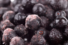 Frosty Blueberries Royalty Free Stock Images