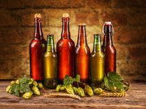Frosty bottles of beer. On wooden board Stock Photography