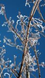 Frosty Branch Stock Photography