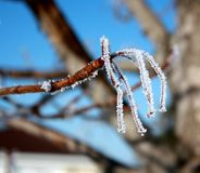 Frosty Branch Royalty Free Stock Photography