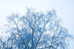 Frosty branch Royalty Free Stock Photos