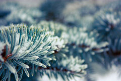 Frosty Branch with Snow in Winter Stock Photos
