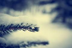 Frosty Branch with Snow in Winter Royalty Free Stock Image