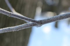 Frosty branch Stock Photos