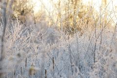 Frosty Branches stock images