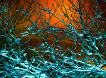 Frosty branches in the night Royalty Free Stock Photos