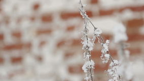 Frosty Branches and Red Brick Wall. Frosty branches against red brick wall stock footage