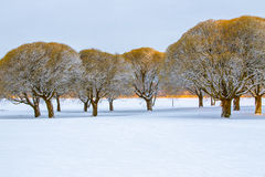 Frosty brittle willows in a snowy park Royalty Free Stock Photo
