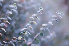 Frosty bush Stock Photo