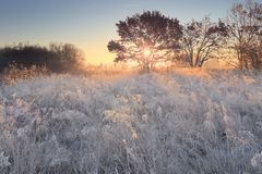 Scenic christmas morning. Frosty christmas winter morning. White frost on meadow in sunlight. Beautiful xmas background Stock Photos