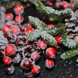 Frosty christmas wreath. A beautiful frosty Christmas wreath of spruce, red berries, green leaves and cones Royalty Free Stock Photos