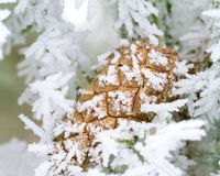 Frosty and cone Royalty Free Stock Images