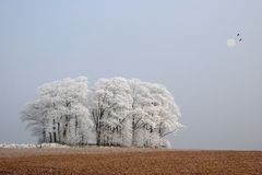 Frosty copse. Autumn winter landscape scene of frost and snow covered trees Royalty Free Stock Photo