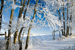 Frosty Country Gate 5 Royalty Free Stock Image