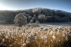 Frosty countryside Stock Image