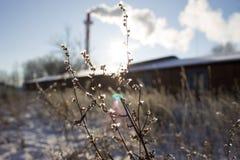 Frosty Day Fotos de archivo