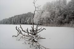 Frosty day. Old tree on the ice,in summer you can swim to it Stock Photos