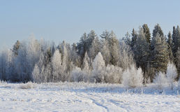Frosty day Royalty Free Stock Images