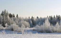 Frosty day Royalty Free Stock Photo