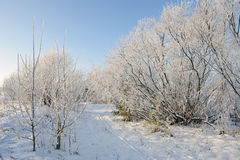 Frosty day Royalty Free Stock Photography