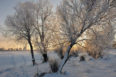 Frosty day Royalty Free Stock Photos