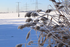 Frosty Day. Winter landscape with fields and meadows / Frosty Day Stock Image