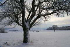 Frosty Day. Winter landscape with fields and meadows / Frosty Day Stock Images