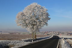 Frosty Day. Winter landscape with fields and meadows / Frosty Day Stock Photo