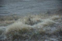 Frosty Dewdrops In Grass Detail en el parque nacional de Yellowstone Foto de archivo libre de regalías