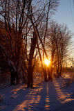 Frosty evening, the setting sun through the branches of the tree Stock Photo