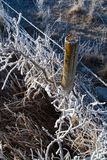 Frosty Fence. A barbed wire fence and shrubs covered in thick hoar frost in mid winter royalty free stock photos