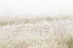 Frosty Field Stock Photography
