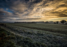 Frosty field Stock Images