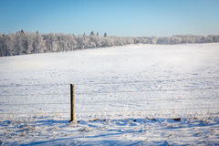 Frosty Field. Wire fence and empty field  with frost covered trees in the background Stock Photography