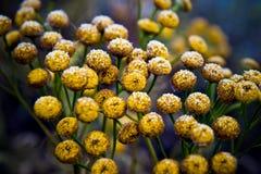Frosty flowers Stock Image