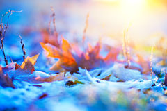 Frosty foliage Stock Photo